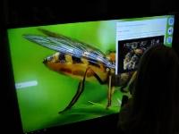 Využití EdutabTV, náhrada interaktivní tabule, interaktivní TV